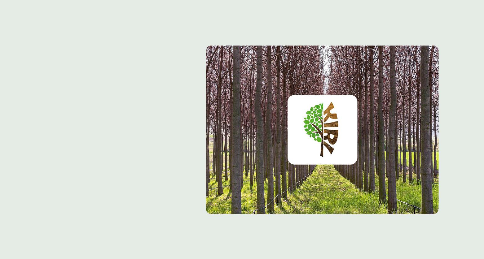 Kiritrees Plantage